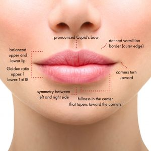 Female Lips Diagram at Coast Dermatology and Laser Center in Laguna Beach, CA